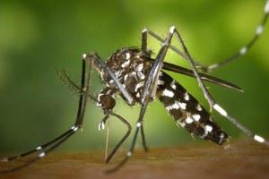 Emissione di ordinanza per la prevenzione ed il controllo delle malattie trasmesse da insetti vettori